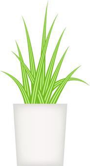 Interior _ Plants