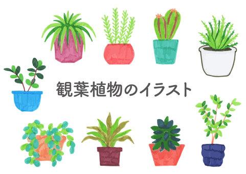Houseplant illustration set