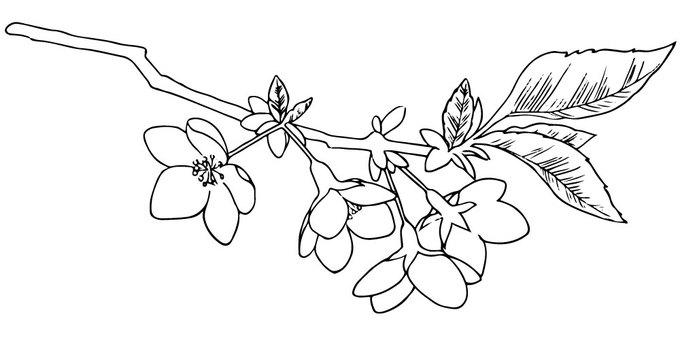 Mountain cherry tree line drawing
