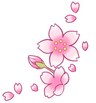 벚꽃 [2]