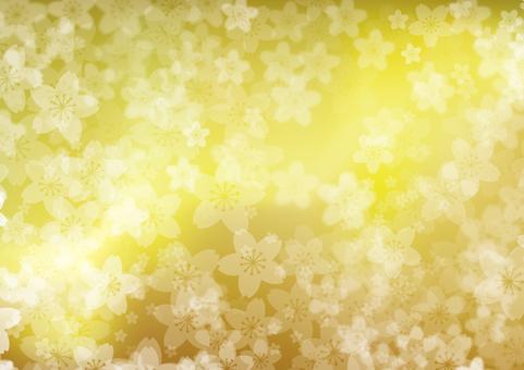 황금 벚꽃
