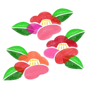 Camellia flower 1