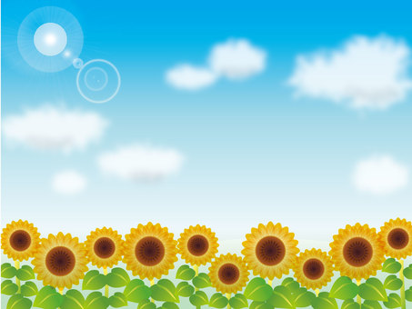 Blue sky and clouds and sunflower