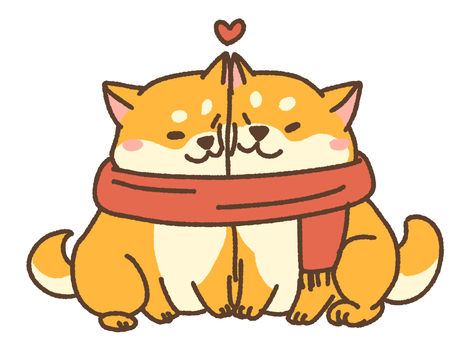 A couple of Shiba Inu