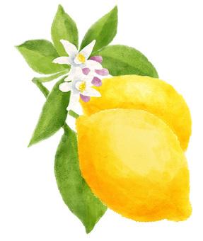 Lemon watercolor style
