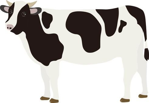 Cow male
