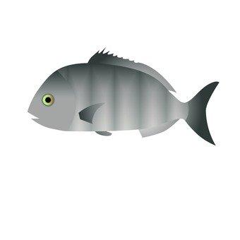 Seafood - Kurodai