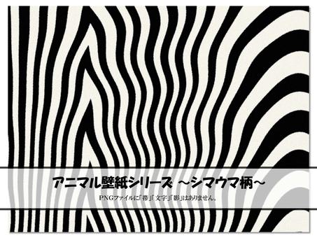 Animal zebra zebra wallpaper background