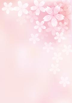 벚꽃의 꽃 16