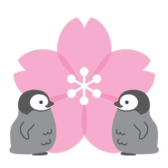 櫻花和小企鵝