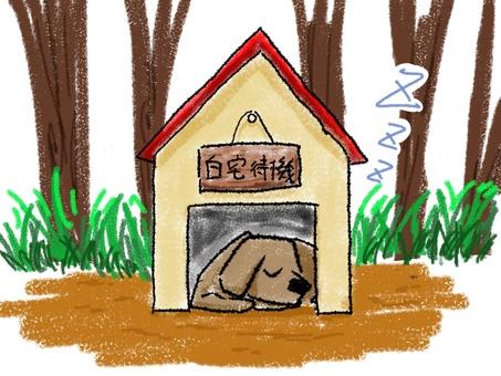 A dog waiting at home