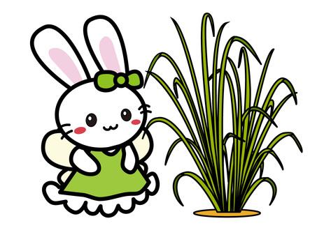 Aroma Usago (lemon grass)