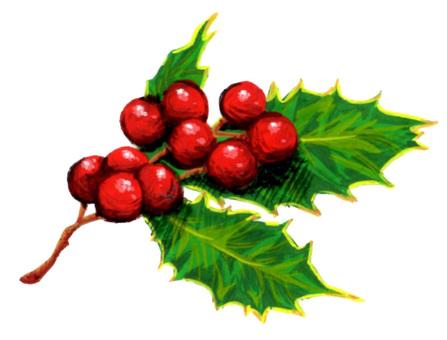 Plant tree Holly