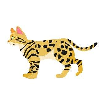 Cat - Bengal