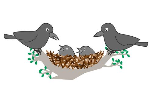 Crow's parenting