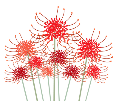 cluster amaryllis