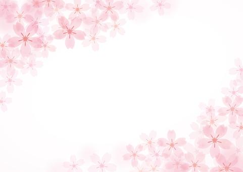 Sakura 17