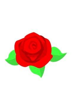 장미 꽃 (빨강)