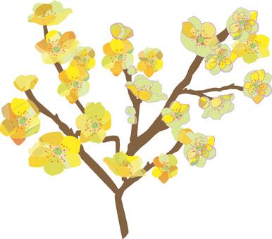 Wax plum tree
