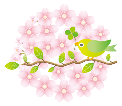 Birds on the background of cherry blossoms