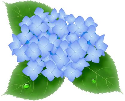 繡球花藍色