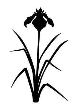 Silhouette of iris silhouette