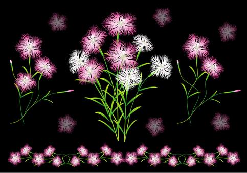 패랭이꽃의 꽃 세트