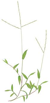 Sasagaya / weeds