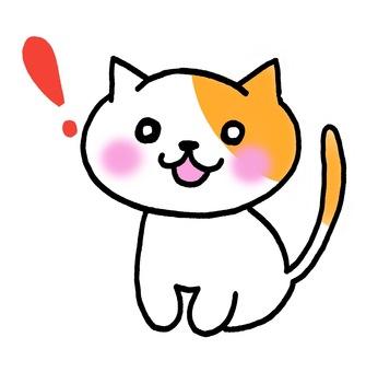 A surprising cat