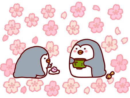桜とお茶会ぺんぎん