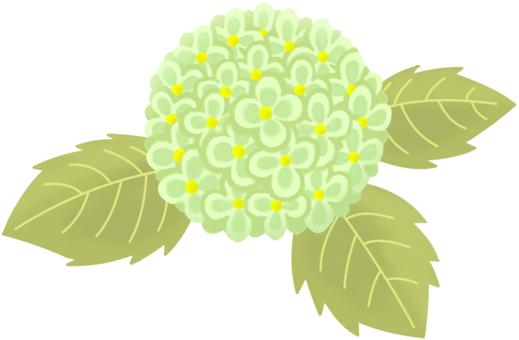 AS plant hydrangea 8 main line none color 4
