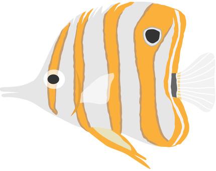 Japanese goose butterflyfish