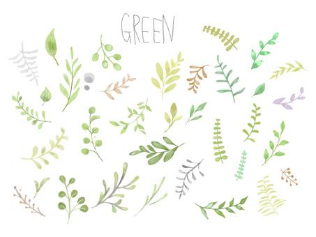 Watercolor botanical illustration set