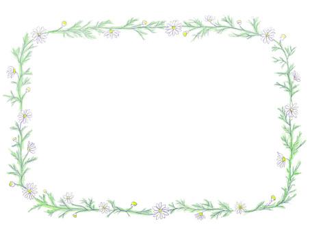 Flower decorative frame Herb Chamomile