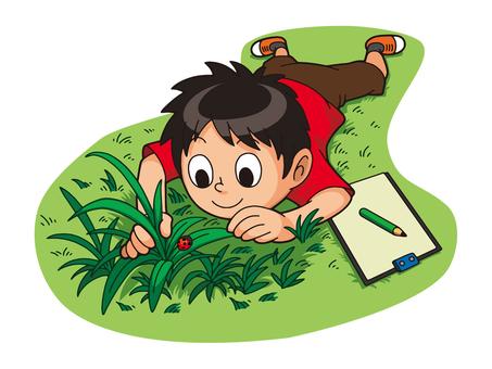 Grassy observation