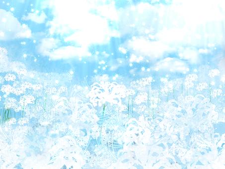 Celestial flowers