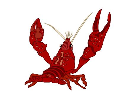 American crayfish