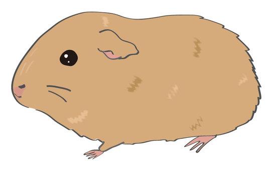 Guinea pig (monochrome tea)