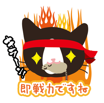 Burning bee cat