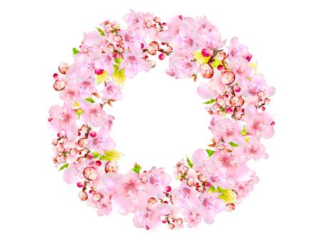 Sakura's frame