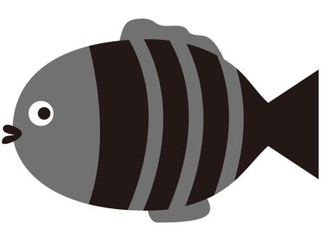 Fish (Shimashima)