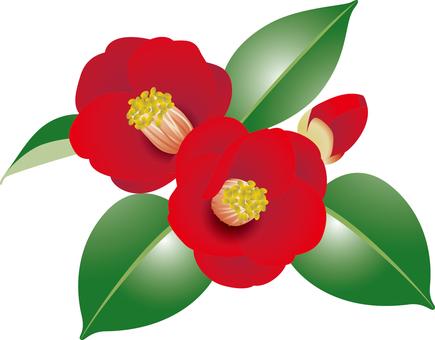 Cut _ camellia 1