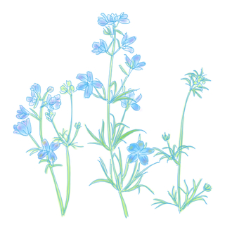 참 제비 고깔 꽃
