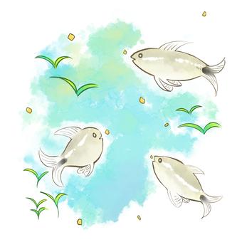 Fish that eats food