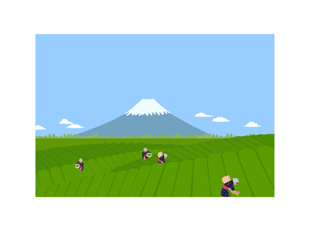 Fuji picking tea background