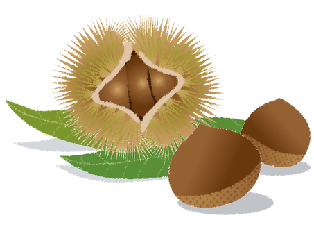 Chestnut 56
