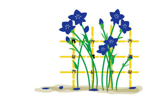 Illustrations of bamboo flowers and bamboo books