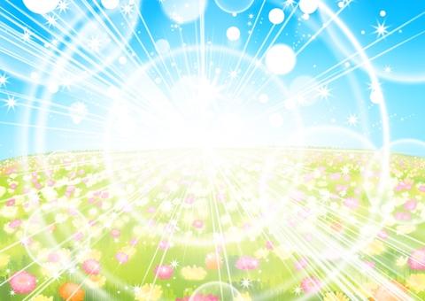 Flower field and light
