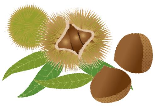 Chestnut 41