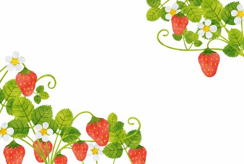 프레임 / 딸기